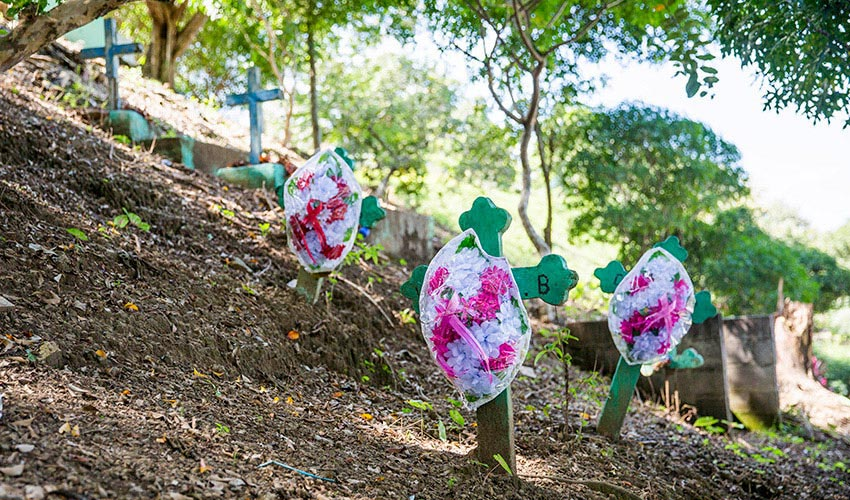 Green crosses with bags of white and pink flowers attached arranged on a hill with trees.